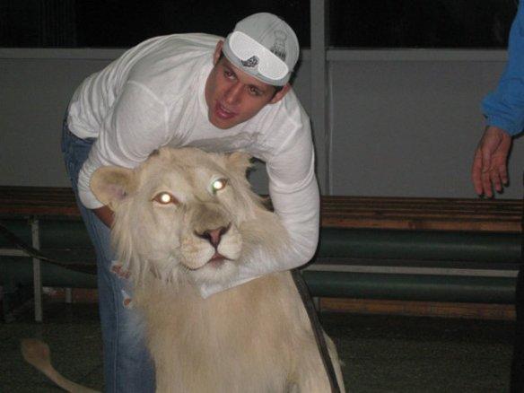 Evgeni Malkin Lion